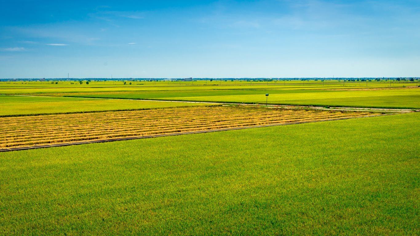 Malaysia Paddy Field